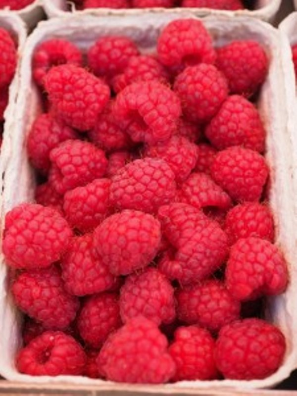 raspberries-499114_1920